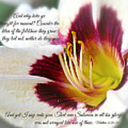 Lily With Scripture Poster