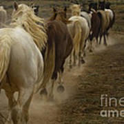 Line Of Mares Poster