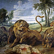 Lion And Three Wolves Poster