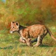 Lion Cub Running Poster