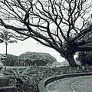 Lion Dog And Tree - Liliuokalani Park - Hawaii Poster