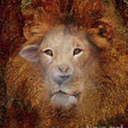Lion Lamb Face Poster