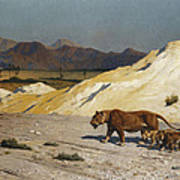 Lioness And Cubs Poster by Jean Leon Gerome