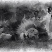 Lions Photo Art 01 Poster