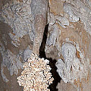 Lions Tail Carlsbad Caverns National Park Poster