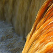 Liquid Amber Poster