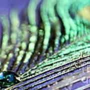 Liquid Peacock Poster