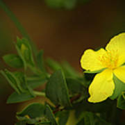 Lit Flower Poster