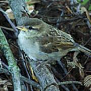 Little Bird Waiting Poster