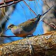Little Birdie 2 Poster
