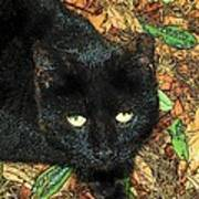 Little Black Cat In Fall Poster