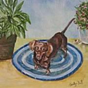 Little Dachshund Puppy Poster