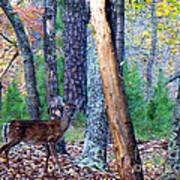 Little Deer In Autumn Poster