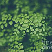 Little Green Leaves Poster
