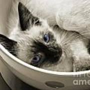 Little Miss Blue Eyes B W Poster