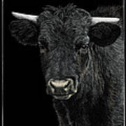 Little Moo Poster