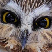 Little Owls Poster