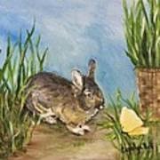 Little Pet Bunny Poster