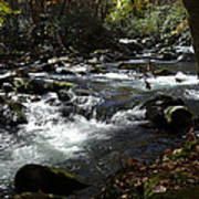 Little Pigeon River - Great Smoky Mountains Poster