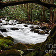 Little Pigeon River In The Smokies Poster