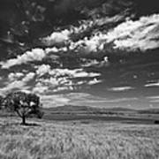 Little Prarie Big Sky - Black And White Poster
