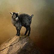 Little Rock Climber Poster