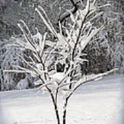 Little Snow Tree Poster by Karen Adams