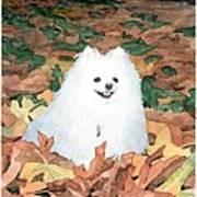 Little White Dog Watercolor Portrait Poster