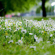 Little White Flowers II Poster