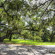 Live Oaks Dripping With Spanish Moss Poster