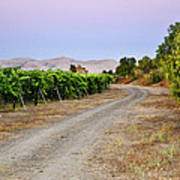Livermore Vineyard 3 Poster