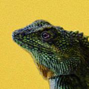 Lizard Poster by Karen Walzer