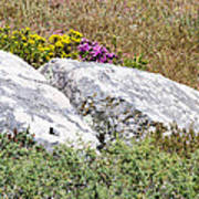 Lizard Protected Granite Boulders Poster