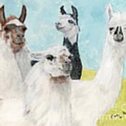 Llama Herd Camelid Farm Ranch Animal Art Poster