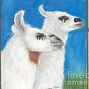 Llamas Tracks Farm Ranch Animal Art Camelid Poster