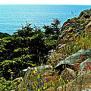 Lobster Cove Head In Gros Morne Np-nl Poster