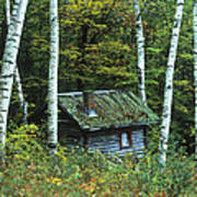 Log Cabin In The Birch Forest Vermont Poster
