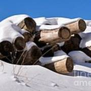 Log Pile In A Snow Drift In Winter Poster