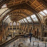 London Natural History Museum Poster