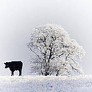 Lone Cow Poster