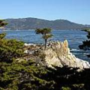 Lone Cypress On 17-mile Drive  Poster