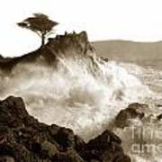 Lone Cypress Tree On  Midway Point Pebble Beach California Circa 1916 Poster