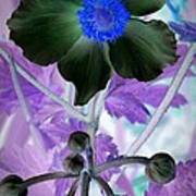 Lone Flower 1 Poster