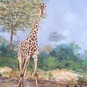 Lone Giraffe Poster