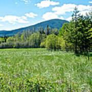 Lone Pine Prairie South Of Polebridge In Glacier Np- Mt  Poster