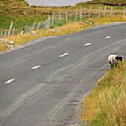 Lone Sheep Poster