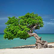 Lone Tree - Aruba Poster