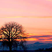 Lone Tree 1 Poster by Rebecca Adams