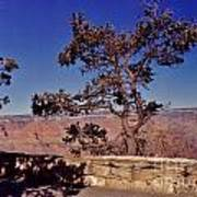 Lone Tree Along The South Rim Poster