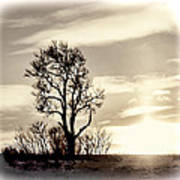Lone Tree At Dusk Poster